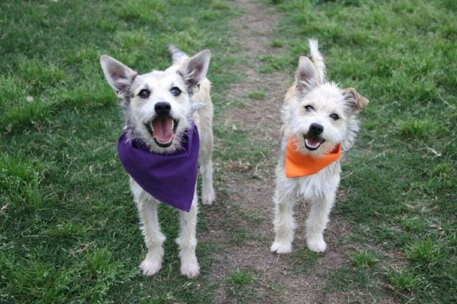 Tiarra (right), Mayor Parker's BARC Dog of the Week, and her sister, Farrah.