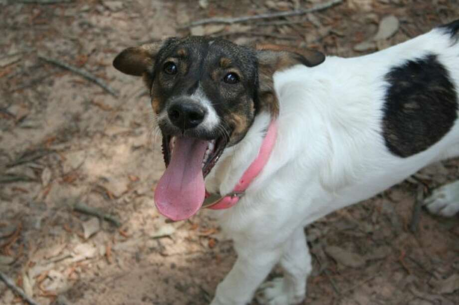 Dixie is a vibrant and sweet girl looking for a loving family.