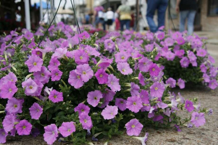 A favorite attraction of guests is the senior plant sale which will return to this year's Good Oil Days April 6 where guests can purchase some color for their yard.
