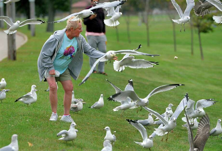 Jerri Capodicci, of Bridgeport, is beseiged by seagulls as she throws out the last piece of bread as she hangs out in Seaside Park in Bridgeport, Conn., on Wednesday Sept. 28, 2016. Jerri came along with her friend Lenore Turner and Lenore's two children Camryn Clark, 10, and Blake Clark, 7. Photo: Christian Abraham, Hearst Connecticut Media / Connecticut Post