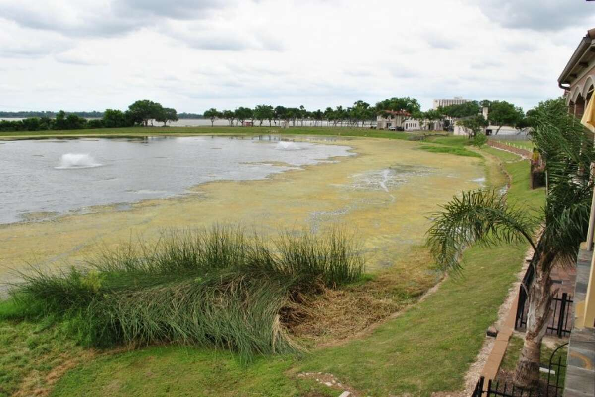 Algae and waterweeds cover the once clear retention pond on the corner of NASA Parkway and Space Center Boulevard. Residents of the adjacent town homes and apartment complex are now waiting to hear back from Olajuwon Farms, whose mansion is in the back, to work with them on the clean-up.