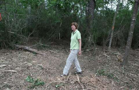 Underbrush In Owen Park Is So Dense Its >> Memorial Park Works To Build New Healthy Forest Houston Chronicle