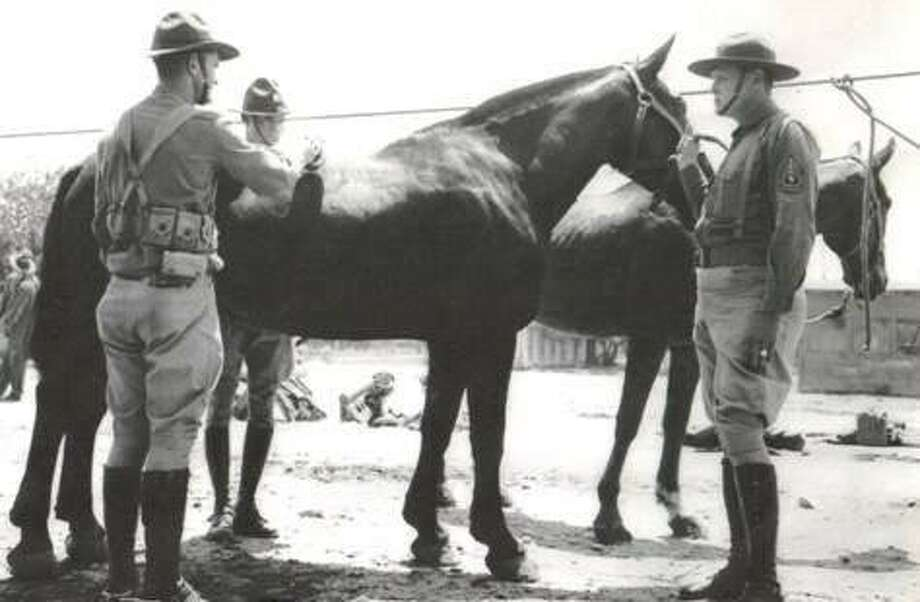In this photo taken in 1941, Corporal G. W. Radney, C. Pierce and First Sgt. Darrell Colley attend to a black horse named Jug Head. Radney, who died on Saturday, May 11, 2013, and lived in Coldspring, Texas, was considered one of the last surviving horse soldier at the time of his death.