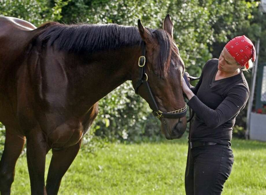 Exercise rider Jennifer Patterson rubs the face of Kentucky Derby winner and Preakness Stakes hopeful Orb as he grazes outside the stakes barn at Pimlico Race Course on Wednesday in Baltimore. The Preakness Stakes is Saturday.