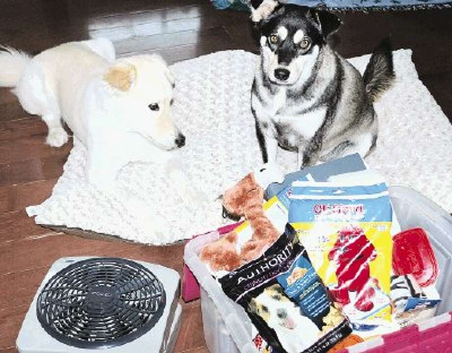 "Fans - check. Food - check. Toys - check. To Lady, a Collie Rough mix, and Abby, a Husky mix, a potential evacuation due to a hurricane would feel more like a vacation than an emergency exit thanks to their ""parents'"" preparedness efforts."