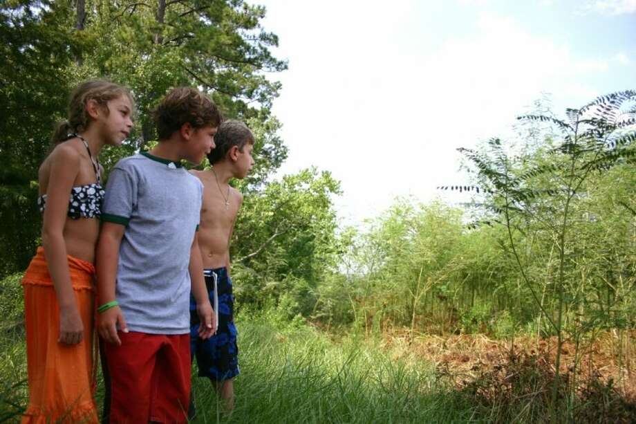 From the left, Emma, Ethan and Cameron show the location of their former lakefront play area behind the Labbe residence in Humble. They cannot take another step toward what used to be the edge of Lake Houston because snakes hide in the weeds; some weeds are taller than they are. The lake is gone with the wind due to the region's drought. David Labbe and other residents are trying to work with Houston city officials on removing those weeds. Photo: STEPHEN THOMAS