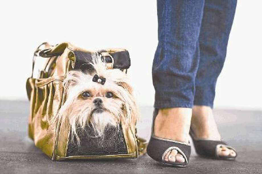Including pets in your evacuation plans is a good idea this hurricane season. Make sure you have a carrier big enough for your pet and make a checklist of all of their needed supplies for travel. / @WireImgId=2626845