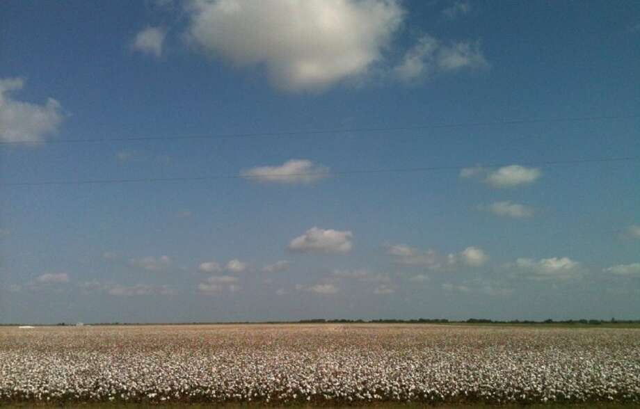 Cottony clouds hang over a cotton field in Wharton County. Parts of the Upper Gulf Coast saw good cotton yields thanks to timely rains, according to a Texas A&M AgriLife Extension Service expert. Conditions varied widely throughout the state in September. Photo: DR. GAYLON MORGAN