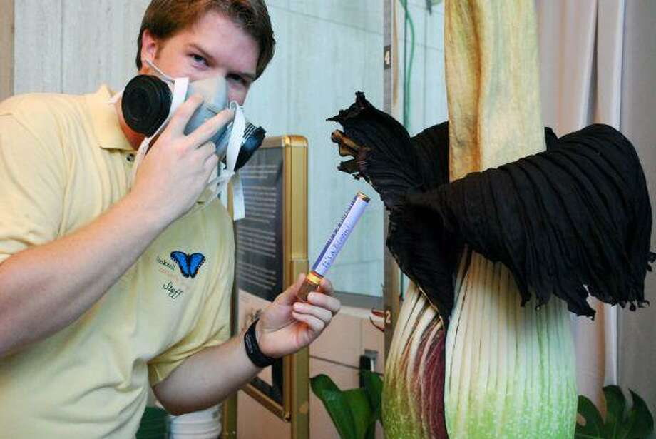 Lois the corpse flower was a media darling at Houston Museum of Natural Science. Lesser known is Loo-is, the leak that reeks at home.