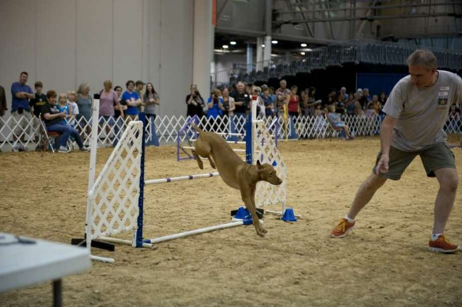 See dogs of all sizes and breeds compete in obstacle courses at the 36th Annual Houston Dog Show. Photo: Submitted Photo