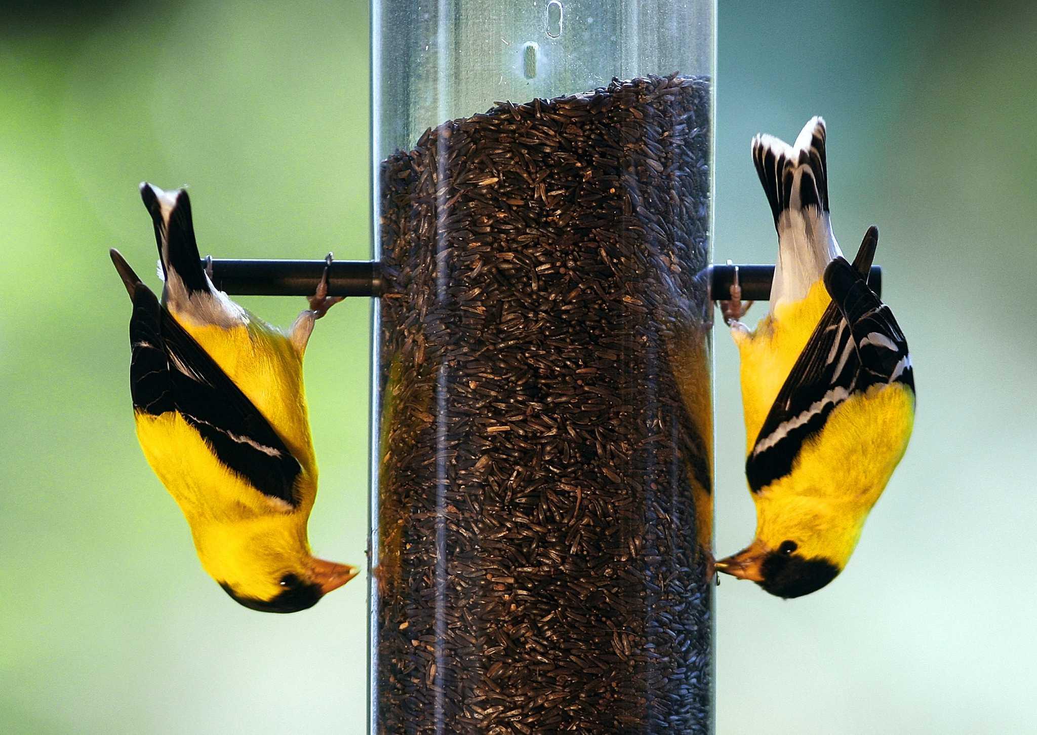garden yellow quest feeders outdoor bird thistle spiral com feeder amazon dp