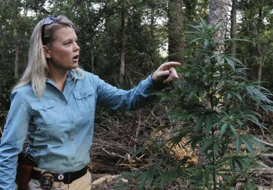 Sgt. Dorcy Riddle, with the Conroe Police Department, talks about the development of the marijuana plants found in southwest Conroe. Law enforcement estimate the collection of approximately 10,000 plants is worth $5 million. / Conroe Courier