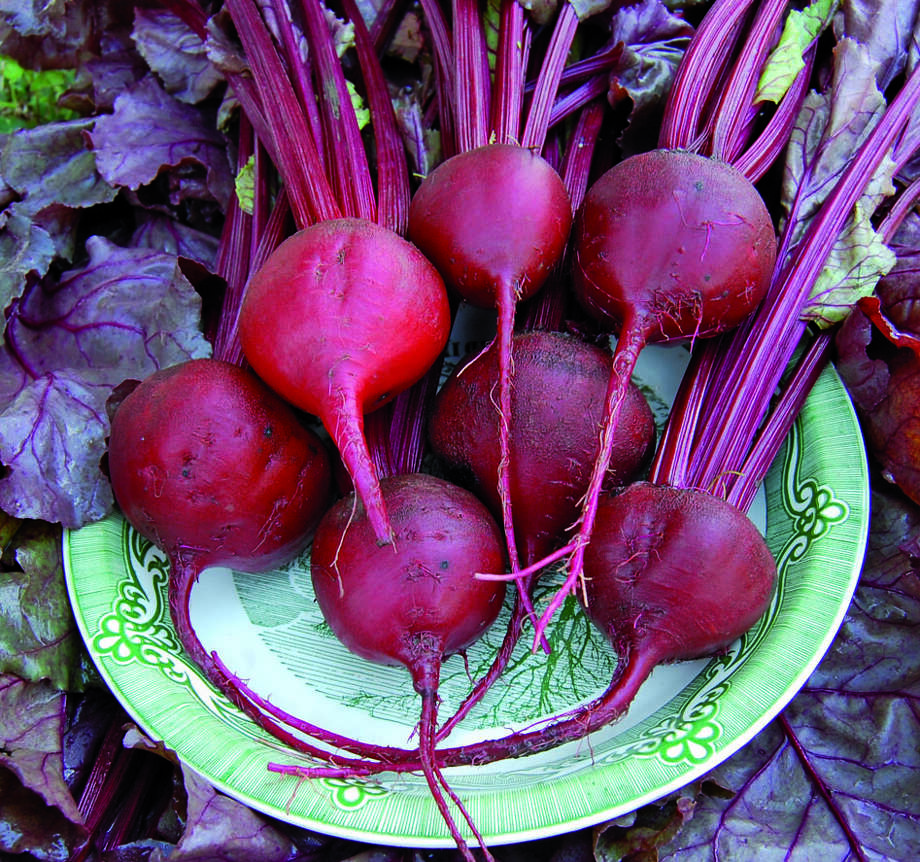 Beets are spectacular in the garden and on the dinner table. Photo: Seed Savers Exchange / ONLINE_YES