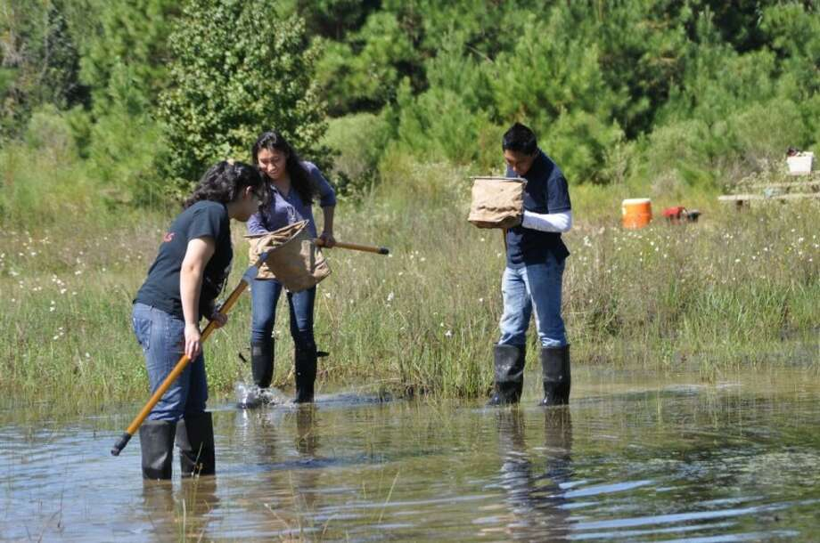 "Waltrip High School seniors from HISD look for macro-organisms in a wetland pond at Little Cypress Creek Preserve in Cypress at the corner of Telge and Spring Cypress, taking part in Bayou Land Conservancy's ""No Child Left Inside"" environmental education program."