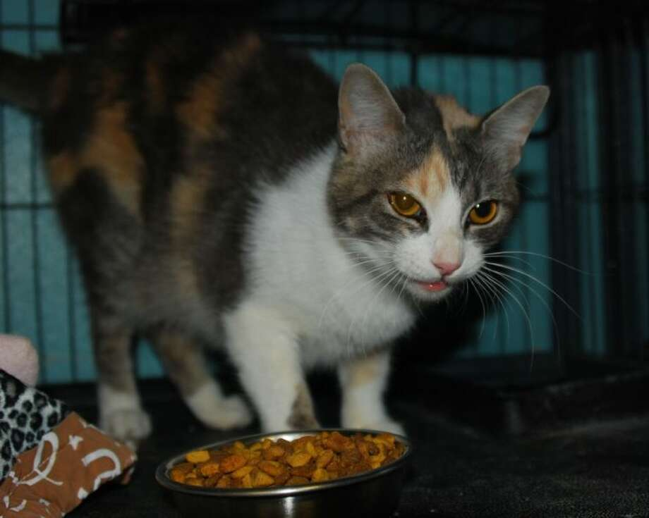 Callie is at the AAR shelter looking for a new home.
