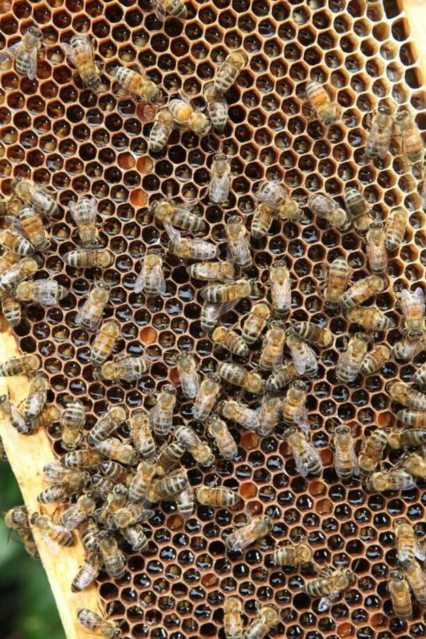 Honey bees at Mark Anderson's home in Bellaire. Photo: Photo By Alan Warren