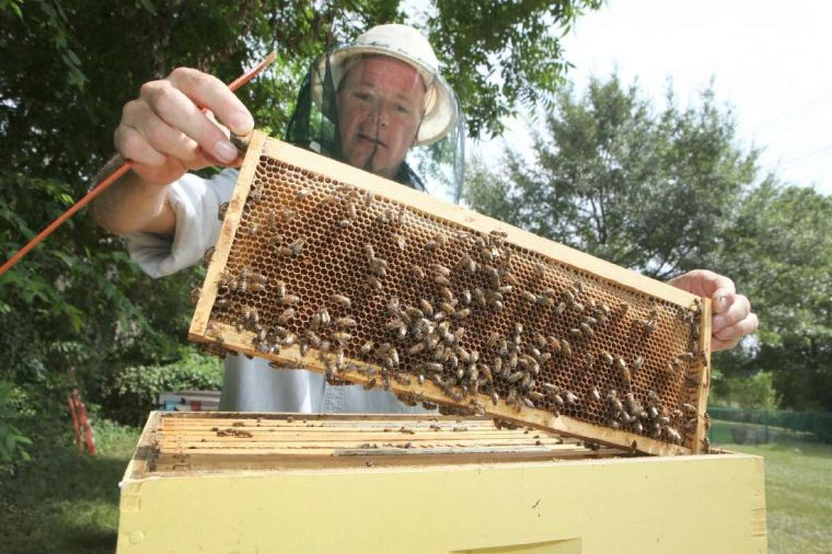 Mark Anderson pulls out a frame of honeycomb as he checks on his honey bees in Bellaire.
