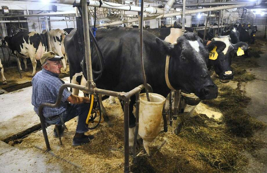 Dairy farmer Dennis Ritter attaches a milking machine to one of his cows Oct. 20, 2013, in Melrose, Minn. Photo: Kimm Anderson
