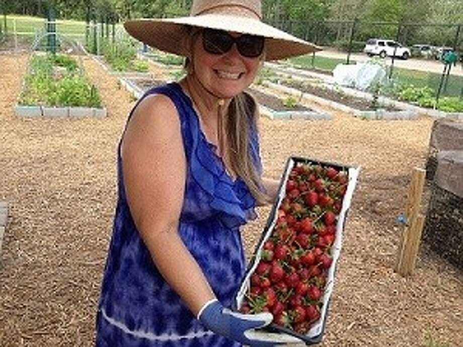 Master Gardener Beth Frantes displays Camarosa Strawberries which will be available at Saturday's Master Gardener January Fruit & Nut Tree Sale.
