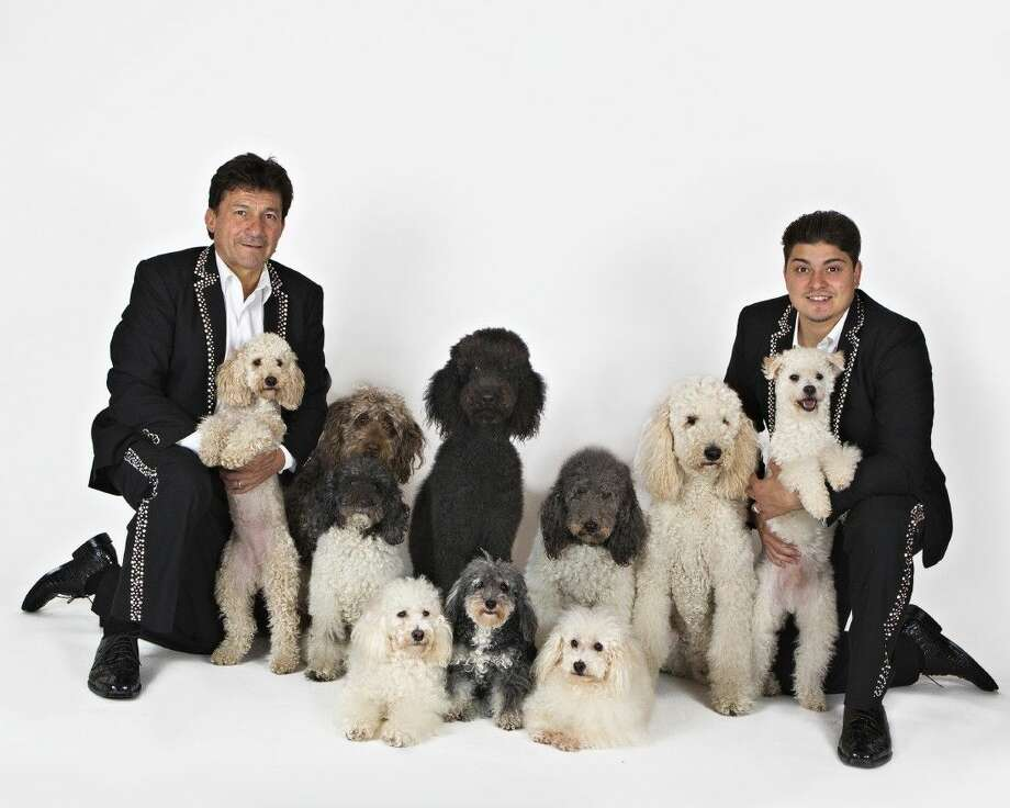 The Olate Dogs won Season 7 on America's Got Talent in 2012. Now the dogs are on tour and coming to the Opera and Performing Arts Society at the Texas A&M campus Feb. 6 at 2 and 7 p.m.