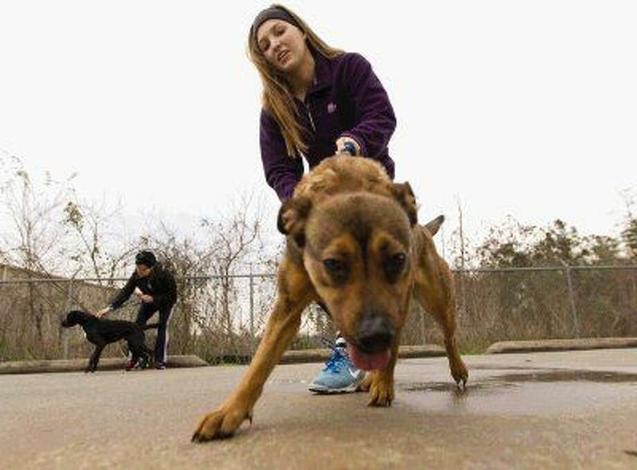 Kristen Ough walks a dog toward a dog park at the Montgomery County Animal Shelter. Volunteers walked 60 dogs over three hours to help the shelter on New Year's Day. Photo: Jason Fochtman