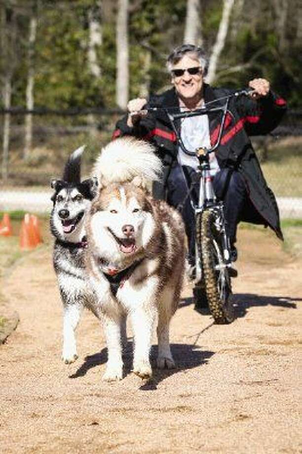Humble resident Randy Forgger is pulled by his two Siberian huskies Bronze, right, and Hallie, left, during the 2nd Annual Arctic Games on Saturday at Lentz Dog Park in Spring. Photo: Michael Minasi