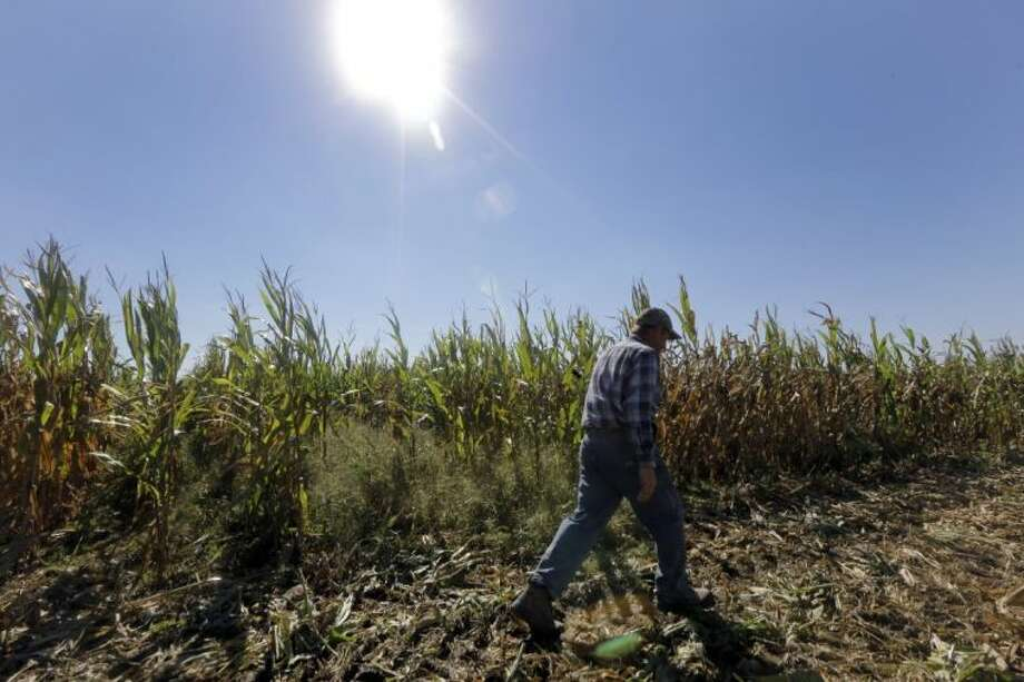 In this Oct. 16, 2013 file photo, Larry Hasheider walks along one of his corn fields on his farm in Okawville, Ill. Cuts in food stamps, continued subsidies to farmers and victories for animal rights advocates. The massive farm bill heading toward final passage this week has broad implications for just about every American from the foods we eat to what we pay for them. Photo: Jeff Roberson