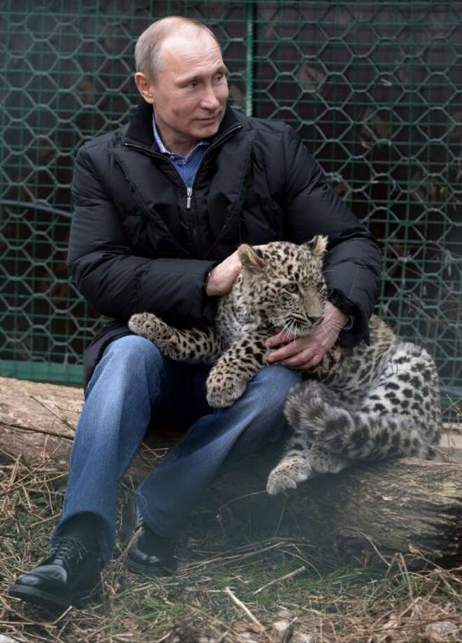 Russian President Vladimir Putin pets a snow leopard cub at the snow leopard sanctuary in the Russian Black Sea resort of Sochi, Tuesday. Putin checked in Tuesday at a preserve for endangered snow leopards and visited a group of cubs born last summer in the mountains above the growing torrent of activity in Sochi for the Winter Games. Photo: Alexei Nikolsky
