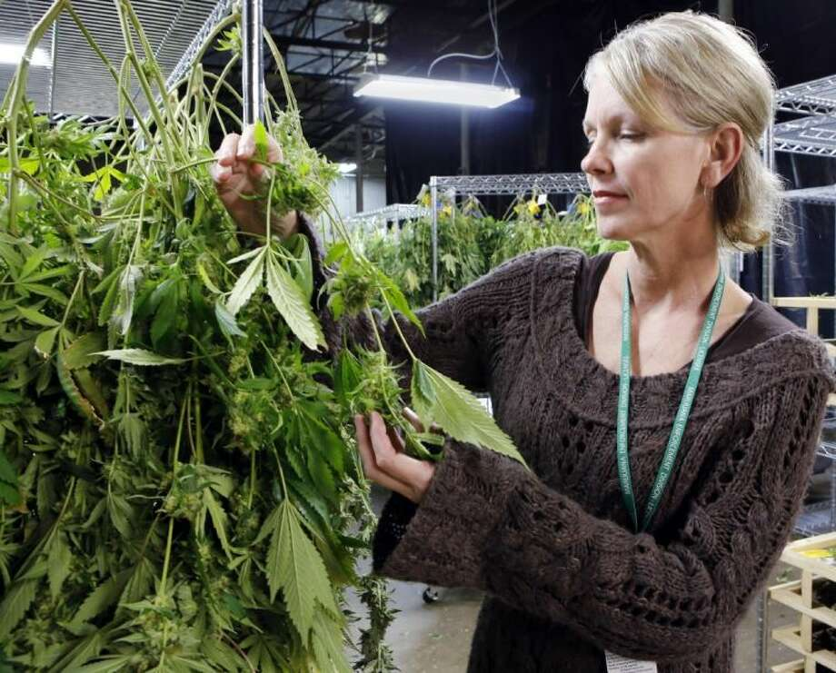In this Thursday, Feb. 6, 2014 photo, Meg Sanders inspects drying marijuana at her grow house in Denver. The agriculture tax questions facing the marijuana industry are the latest wrinkle for the states flouting federal drug law and trying to establish commercial recreational pot industries. Photo: Ed Andrieski