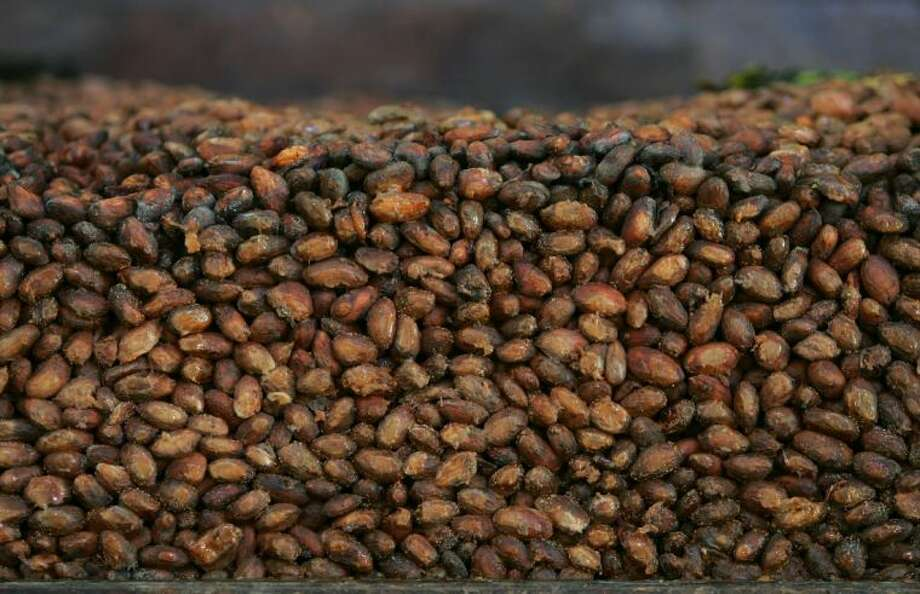 This file photo shows organic cocoa beans in storage at a factory in Ocumare de la Costa, 100 kilometers (60 miles) west of Caracas, Venezuela. A large-scale study is being launched in 2014 to see if pills containing the nutrients in dark chocolate can help prevent heart attacks and strokes. It is sponsored by the National Heart, Lung and Blood Institute and Mars Inc., maker of M&M's and Snickers bars. The candy company has patented a way to extract flavanols from cocoa in high concentration and put them in capsules. Photo: Fernando Llano