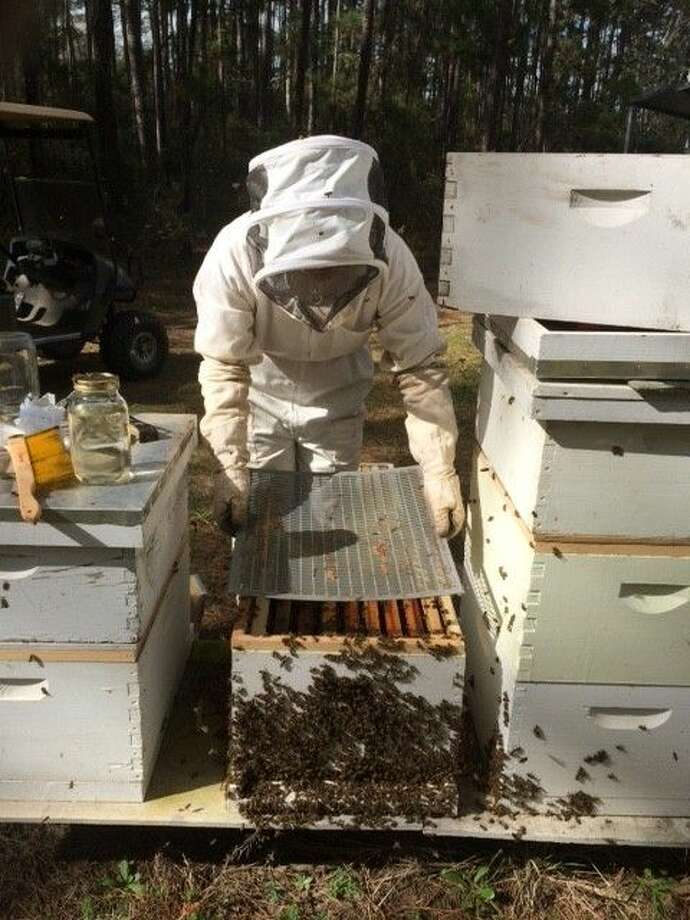 Montgomery County Beekeepers Association President Chari Elam prepares to extract honey from combs harvested at her and her husband James' apiary at their home.