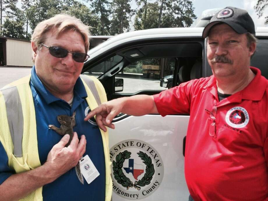 "Precinct 3 Superintendent Troy Gibson points to rescued squirrel ""Rocky,"" who is holding tightly to Precinct 3 operator Dave Gottberg."