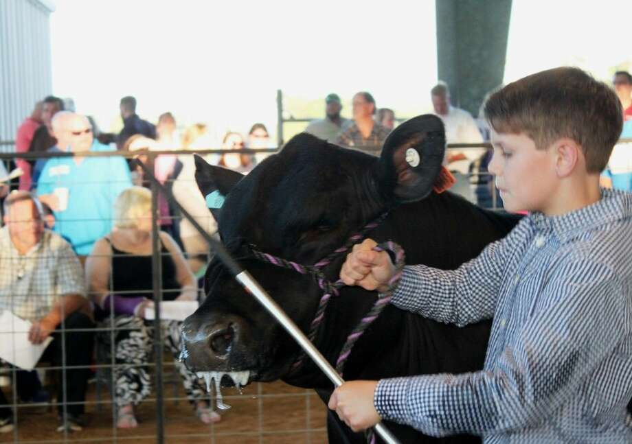 Fifth grade A.R. Turner Elementary student, Hutton Hoegenmeyer, earned $2,100 for his steer at the Willis Ag Booster Club's annual post-fair Freezer Sale on Friday in Willis.