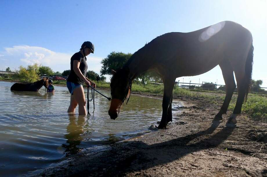 In this photo taken on Wednesday Claire Walsh prepares to swim with her wild mustang Dare to Dream at Lorrie Grover's Blue Sky Ranch in Corpus Christi. Photo: Gabe Hernandez