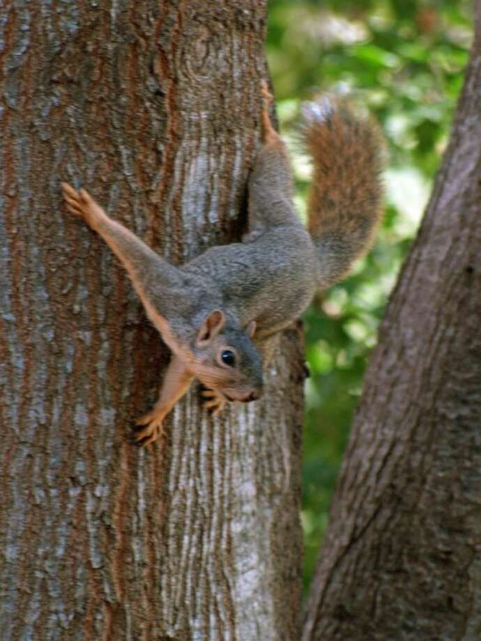 This young squirrel may look friendly enough, but if people start feeding it, the creature may no longer be able to fend for itself.