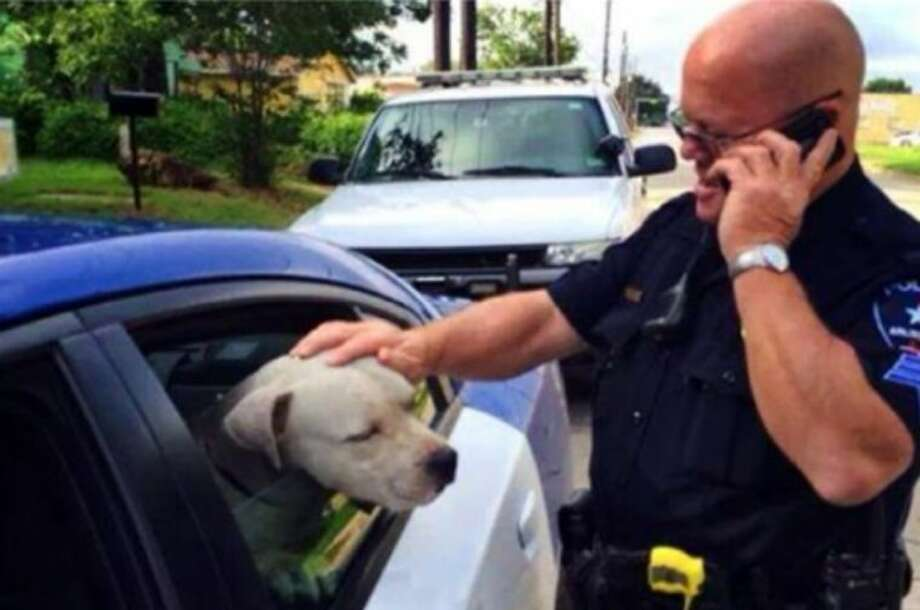 "This undated image made from video provided by the Arlington Police Department shows Sgt. Gary Carter with the pit bull he rescued. On June 27, Carter was summoned to the scene of a dog chasing residents but he and another officer took time to observe the dog's behavior and determined that it was just thirsty, lost and afraid. On Thursday, with time running out for the dog before euthanasia, Carter rescued ""Jeffrey"" and adopted him."
