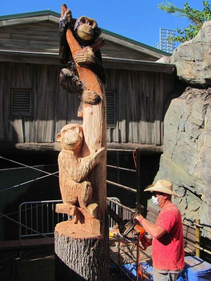 Chain saw artist Cam Dockery carves the second of what will be three chimps outside the chimpanzee viewing enclosure at the Houston Zoo.