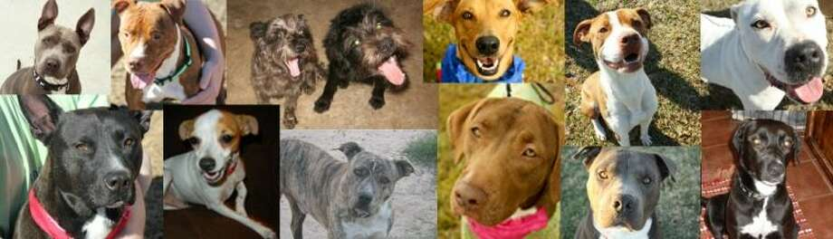 The Animal Safety League of Northeast Harris County is searching for any information on several animals they rescued after they were dumped near Crosby.