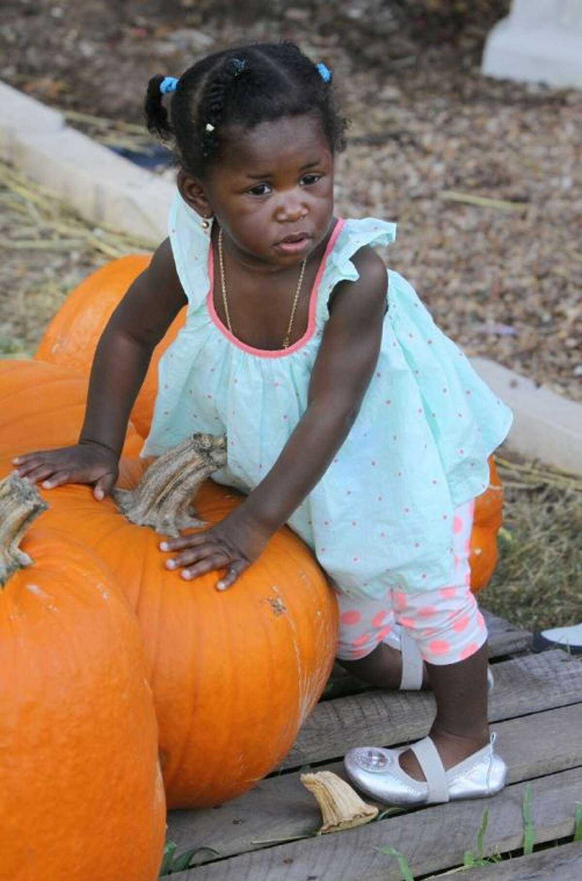 Mya Emasealu, 1, of Sugar Land seems to be picking out a pumpkin at the Pumpkin Patch at Holy Cross Episcopal Church in Sugar Land on Saturday, Oct. 26.