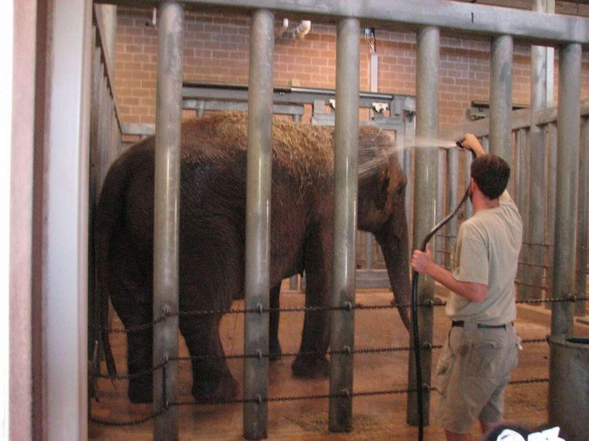 Elephants enjoying a hot bath