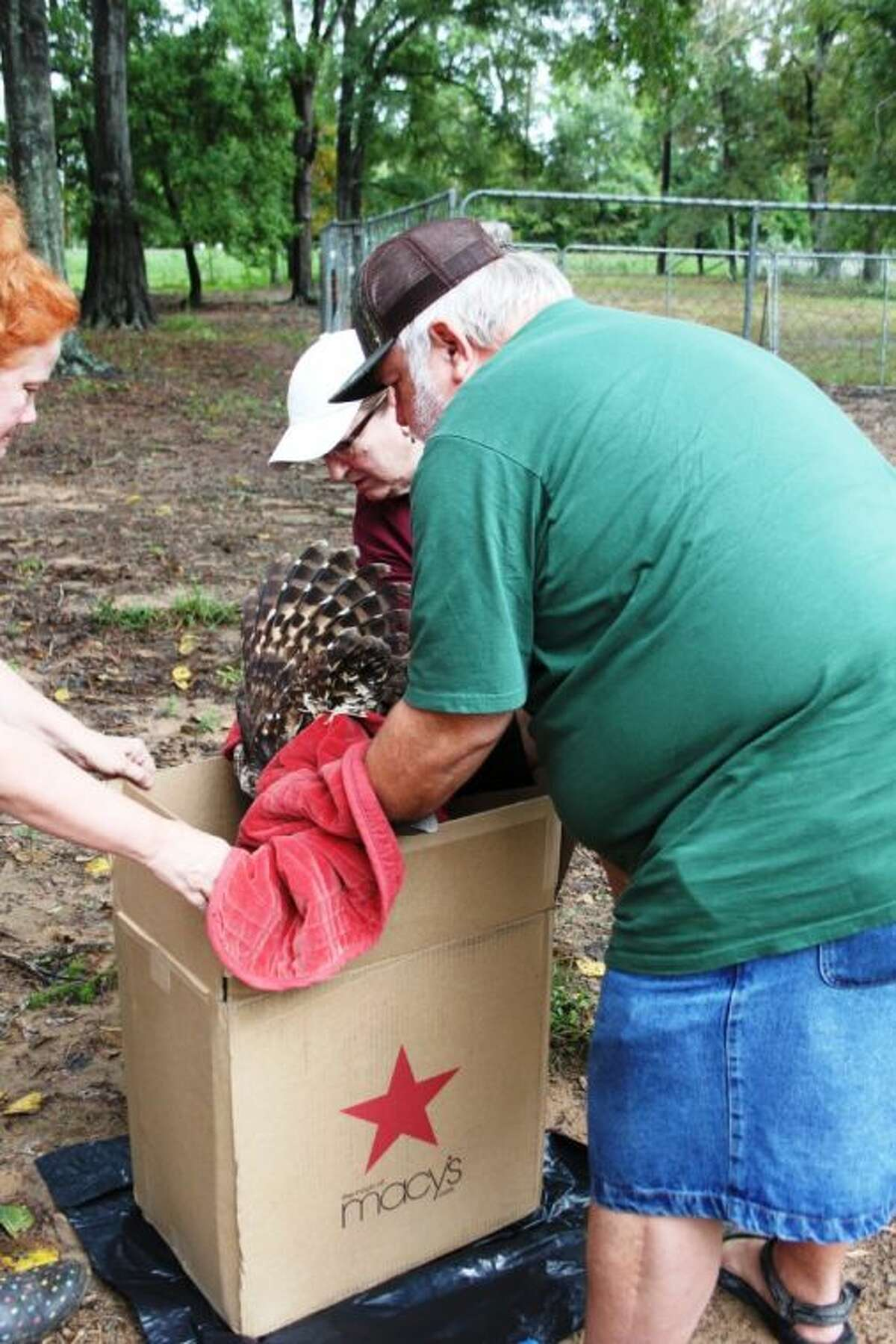 David and Susan Kalich (right), friends of Cookie McKee (left) helped McKee capture a wounded barred owl on Thursday, Oct. 31, at McKee's Snuff Ridge Ranch on FM 1010. The owl was then taken to a wildlife rehabilitator who is expected to nurse the owl back to good health.