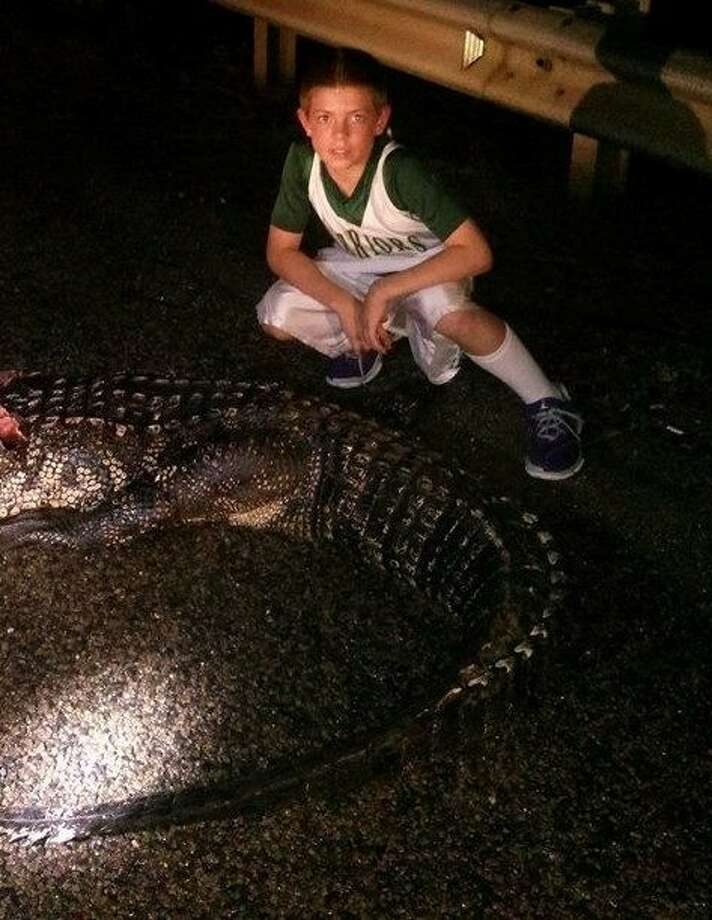 C.J. Groh of Splendora has no concern about standing near this 12-foot-long alligator. The alligator was killed Wednesday evening, Oct. 30, when the Groh family's vehicle hit the reptile in the middle of US 59 south of Cleveland near the San Jacinto River bridge.
