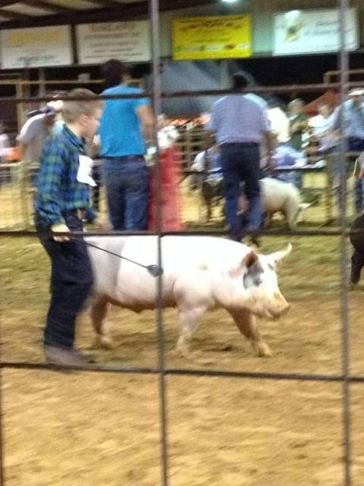 Mason Richardson won first in class with his market hog.