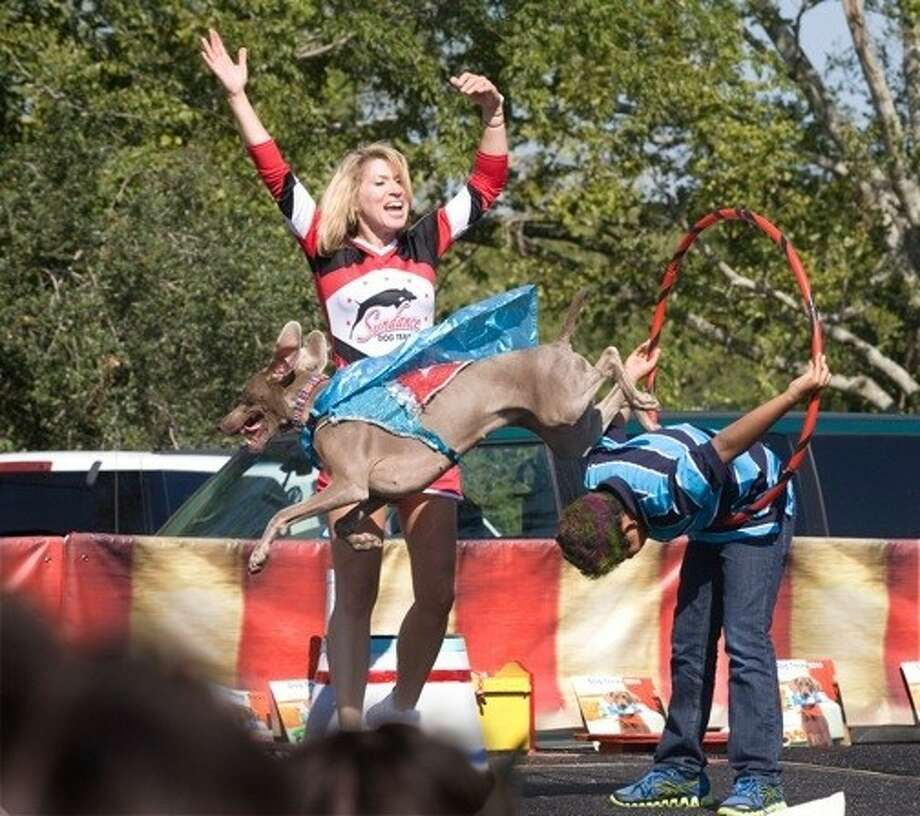 """Ordinary jumping through a hoop is too easy for Kyra Sundance and her athletic Weimeraner, Jadie, part of the stage entertainment during Bridgeland's recent Howl-O-Ween Fest. Jadie also demonstrated her intelligence by """"reading"""" numbers, a favorite with the crowd of dog lovers."""