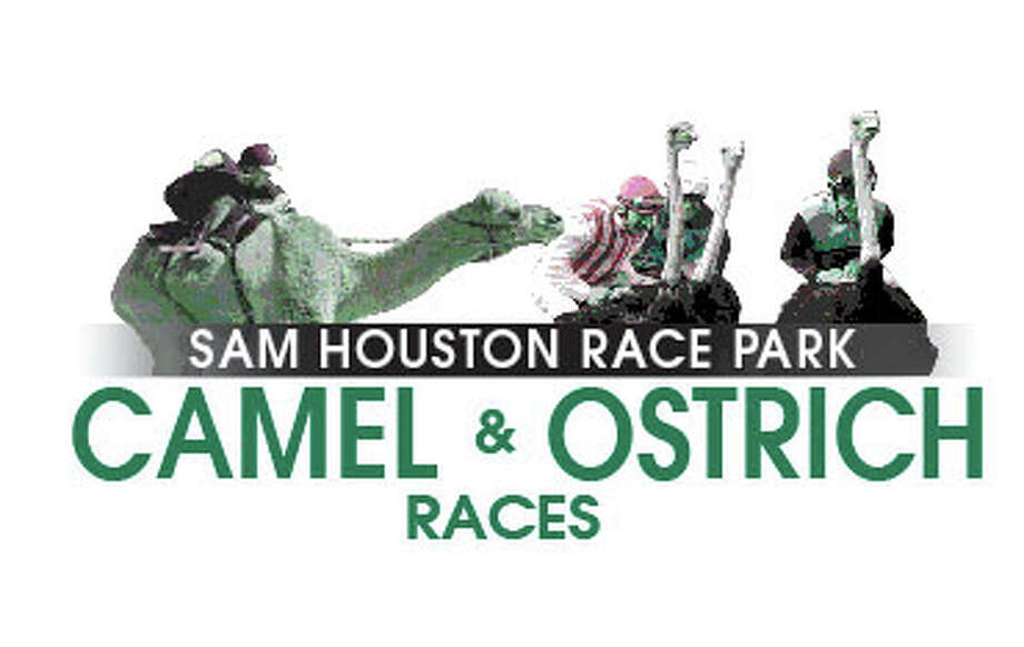 Sam Houston Race Park hosts Camel and Ostrich Races on March 10.