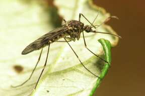 West Nile virus cases have been confirmed around San Antonio and Bexar County.