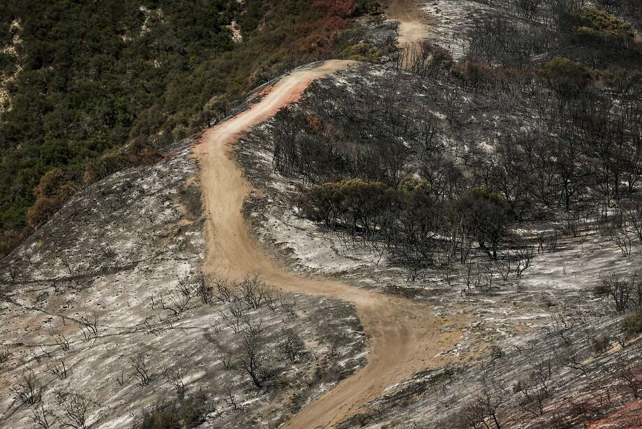 A view of the burned-out forest after the Soberanes Fire roared through Monterey in September 2016. Photo: Gabrielle Lurie, The Chronicle