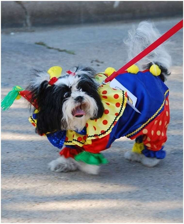 CreekFest now includes dog costume contest