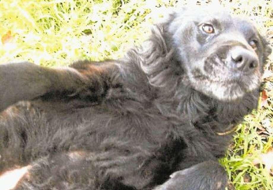 Montgomery County pet adoption of the week, Jan. 26 / @WireImgId=2553829