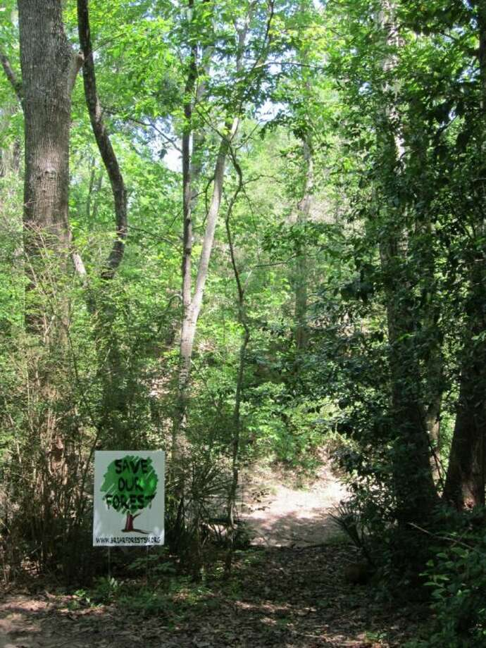 Pictured is forested area along Buffalo Bayou, between Wilcrest and Eldridge. Photo: Submitted